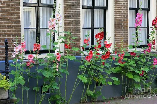 Sophie Vigneault - Flower Street
