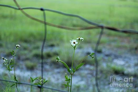 Flower through the Fence Line by Theresa Willingham