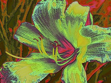 Flower by Tracy Daniels