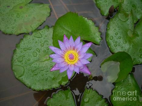 Flower by Vaibhav D