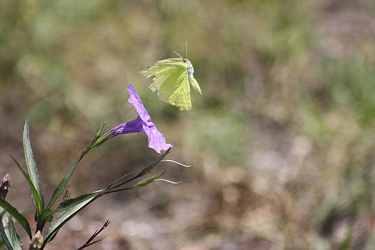 Flower which did sway the butterfly flew away by Connie Koehler