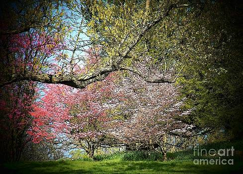 Flowering Trees by Joyce Kimble Smith
