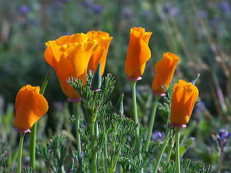 Earl Bowser - Flowers 01