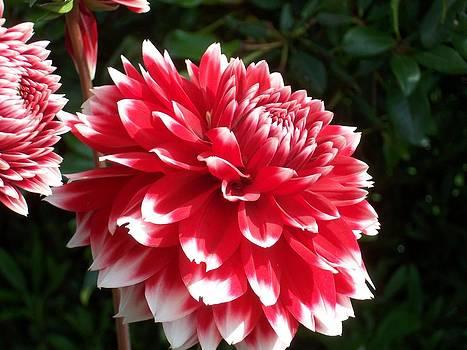 Earl Bowser - Flowers 02