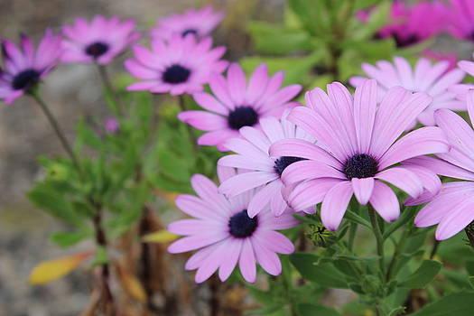 Flowers by Allen Jiang