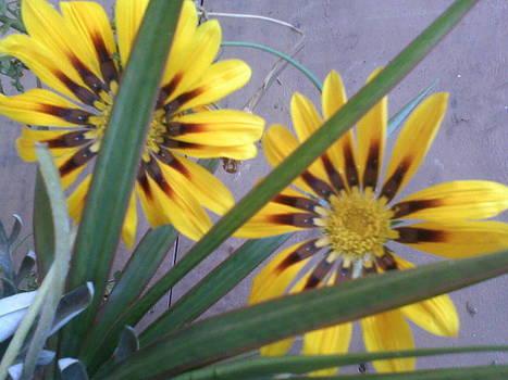 Flowers by Amisha Tripathy