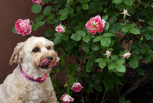 Flowers are Yummy by Donna Harding
