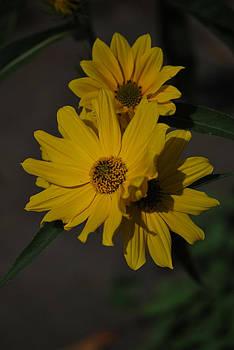 Michelle Cruz - Flowers Bloom in October