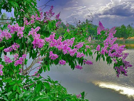 Roy Foos - Flowers By The Lake