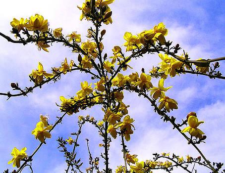 Flowers cascade by Guadalupe Nicole Barrionuevo