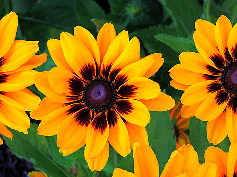 Flowers Colored in Yellow by Gordon H Rohrbaugh Jr