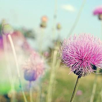 #flowers #flatonia #ranch #wildflowers by Victoria Haas