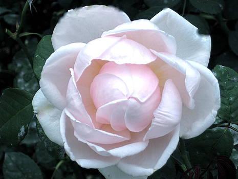 Flowers II by Valentine Estabrook