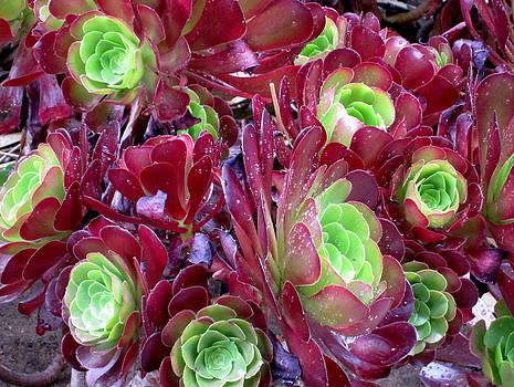 Flowers III by Valentine Estabrook