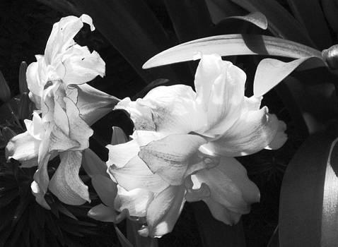 Flowers in Shadow by Rebecca Blain