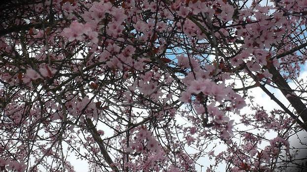 Flowers In The Sky by Lee Yang
