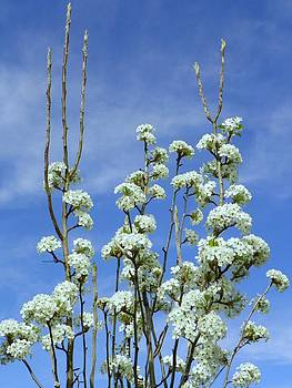 Flowers In The Sky by Vicky Mowrer