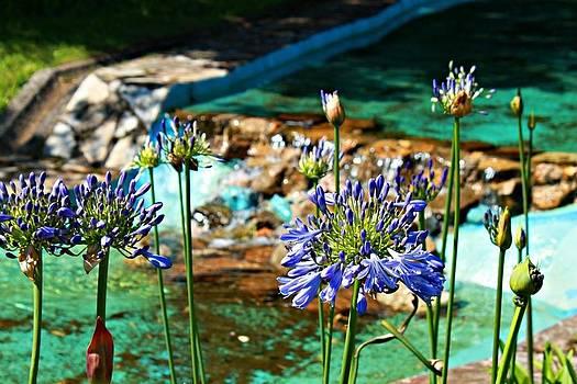 Flowers by Jenny Senra Pampin