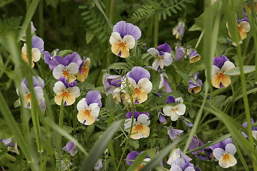 Flowers by Mac Booey