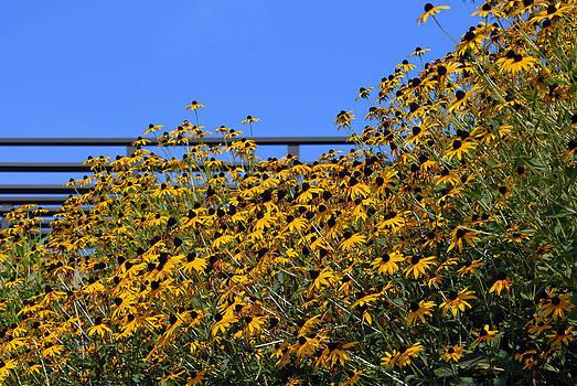 Flowers Reaching for the Sky by Susan Leggett