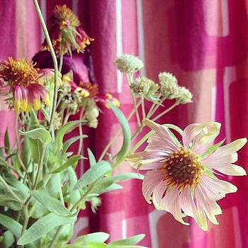 Flowers @sadieofthewoods Gave Us by Sarah Johanson