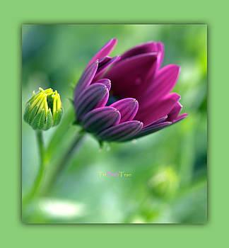 Flowers by Tri Tran
