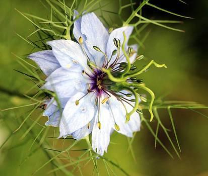 Flowerscape 2 by Shiladitya Sinha