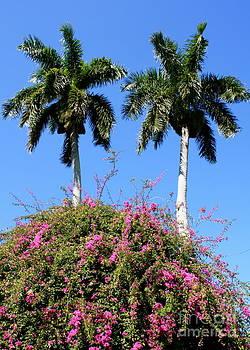 Danielle Groenen - Flowery Palm Trees