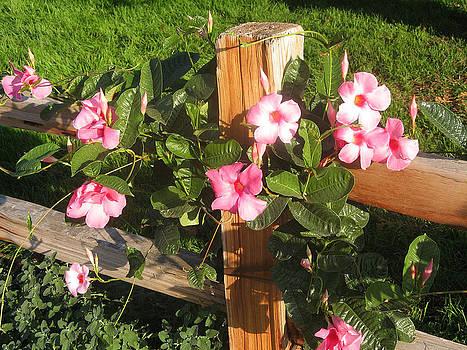 Flowery vine on wooden fence by Leontine Vandermeer