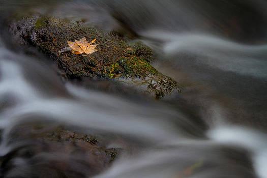 Jonathan Hansen - Flowing Leaf 1