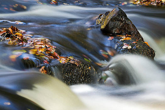 David Pringle - Flowing River III