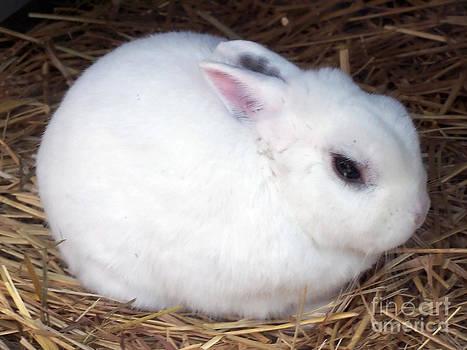 Anne Ferguson - Fluffy and White
