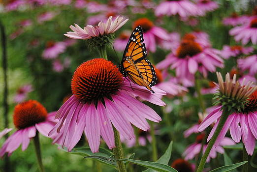 Flutter By by Stephanie Thomson