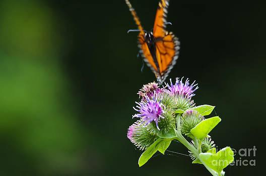 Christine Kapler - Fluttering away...