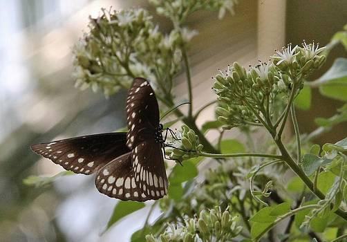 Fluttering Fantasy by Sandeep Gangadharan
