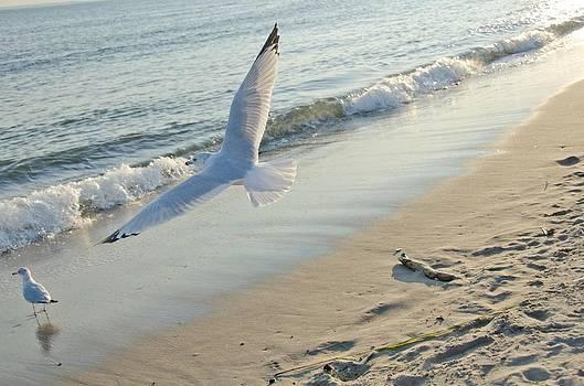 Fly away by Marcel Krasner