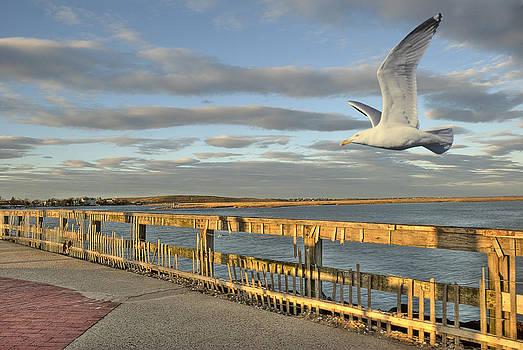 Fly Bye by David Clark