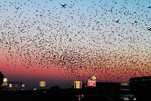 Fly freely  by Jamie Brogdon