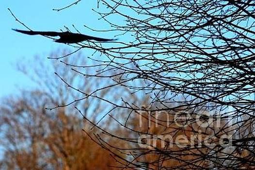 Flying bird by Kyra Munk Matustik