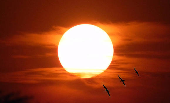 Flying birds in a sunset by Jesus Nicolas Castanon