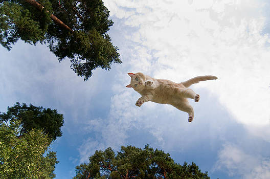 Flying cat by Micael  Carlsson
