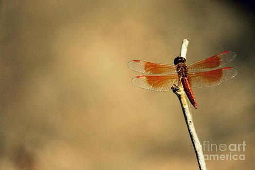 Flying colours by Vishakha Bhagat