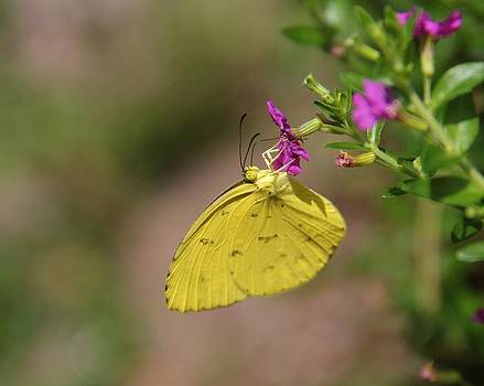Flying Flower by Sandeep Gangadharan