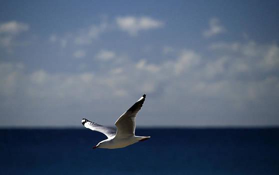 Noel Elliot - Flying Free