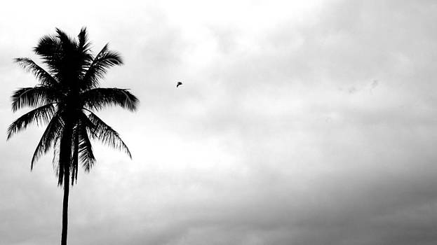 Flying-off from palm tree by Rosvin Des Bouillons