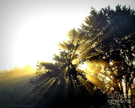 Fog and sun by Melissa Nickle