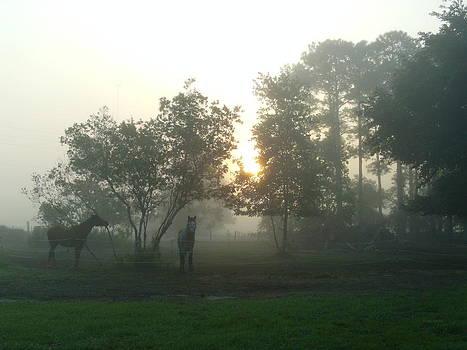 Fog by Lisa Pedro