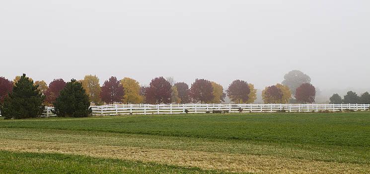 Joel Witmeyer - Foggy Fall