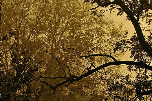 Foggy Morn in Sepia by Jeanne Thomas