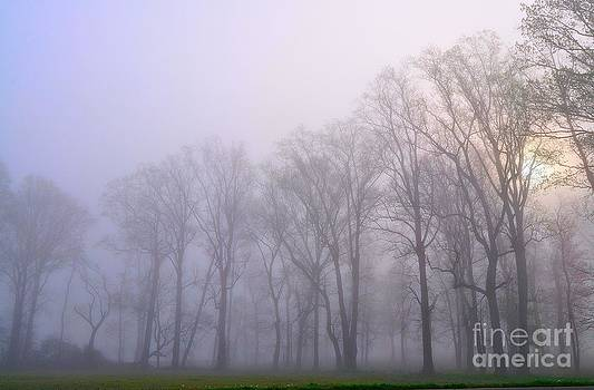 Foggy Morning by Eric Grissom